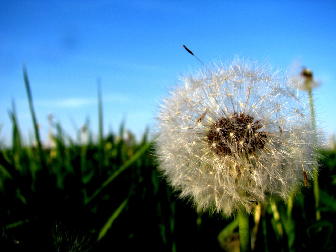 … a dandilion seed takes flight …