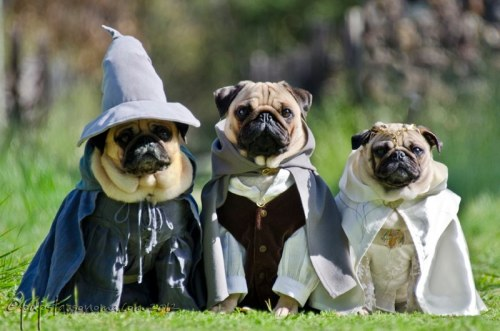 Gandalf, Frodo and Lady Galadriel.