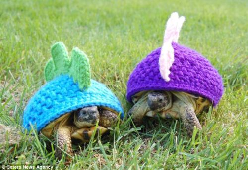 thefrogman:  Tortoise cozies crocheted by Katie Bradley [etsy]  For my honey.