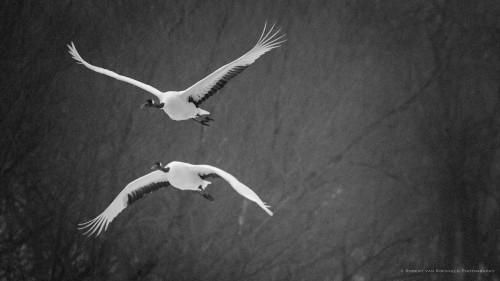 cranescape 03
