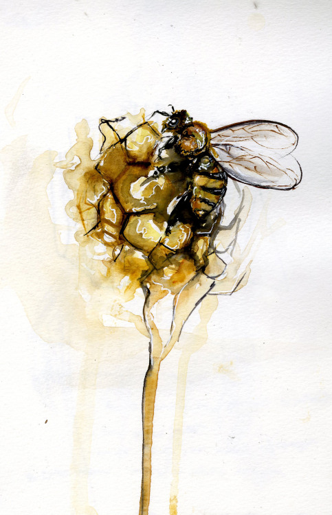 """bee and honeycomb""  watercolor, micron, sharpie, and pencil  Rae"