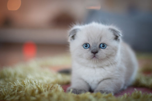 mostlycatsmostly:  (via 51213)