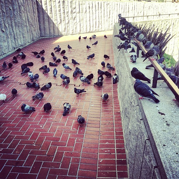 Pigeon parking area (at San Francisco Visitor Information Center)