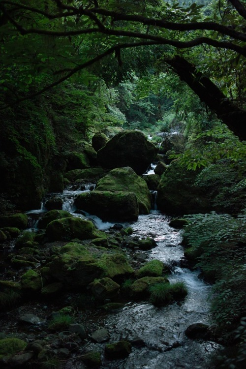 x-enial:  Forest Stream (source)