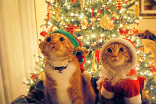kittehkats:  Waiting for Santa Such little sweeties!