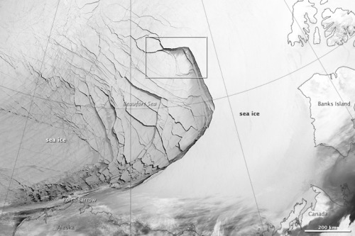 roomthily:  ice fractures on the Beaufort Sea via Earth Observatory