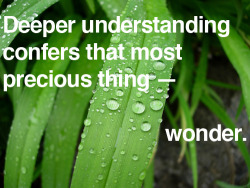 explore-blog:  Wonders of life