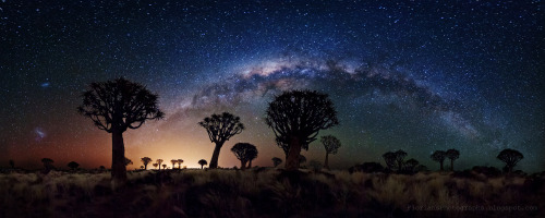 n-a-s-a:  Milky Way Over Quiver Tree Forest  Image Credit & Copyright: Florian Breuer