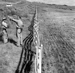 Hebgen Lake, Montana, Earthquake August 1959. Fence compressed by a component of the downhill motion.W.B. Hamilton and R.E. Wallace on the left. (USGS)