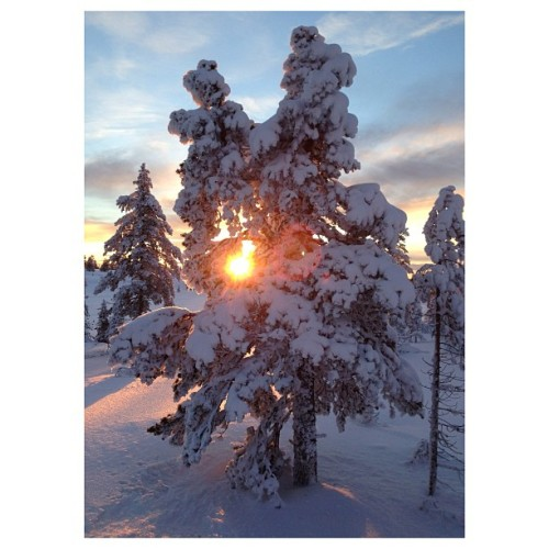 Norsk natur. #norway #sun #tree #snow #nature