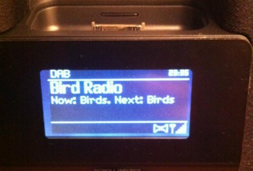 Bird Radio Ugh, I hope he doesn't tweet about this.