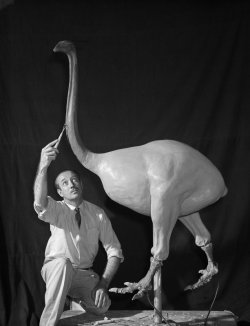 amnhnyc:  It's Tuesday's peek into the archives!Taxidermist George Adams constructs the foundation for a Moa bird model, June 1951. © AMNH Library/2A2584