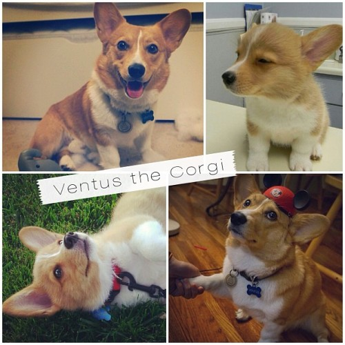 ventusthecorgi:  Look at this collage my auntie made of me!! =]  Daww Ventus, you so cute!
