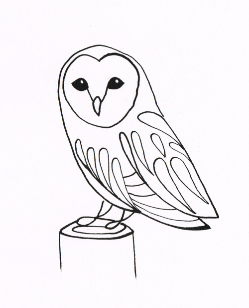 Barn Owl - Dip pen and ink drawing Original pen and ink drawings available to buy from FluidAnimals.com!