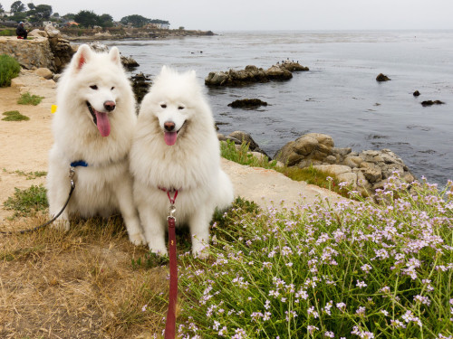 Auntie Erika's Kuma and Yuki by the sea!