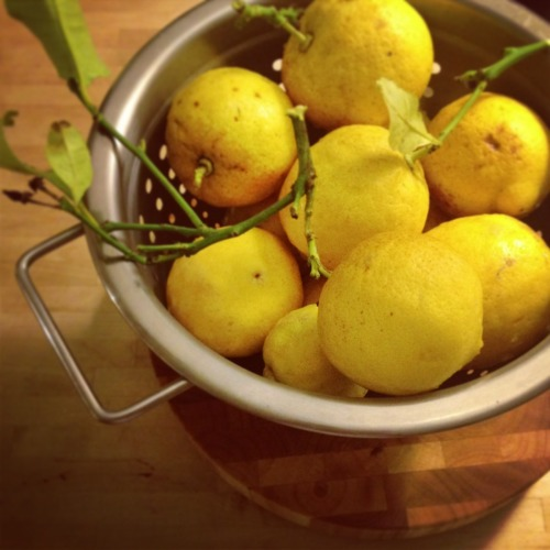 Picked a pile of lemons the other day. What should I make?
