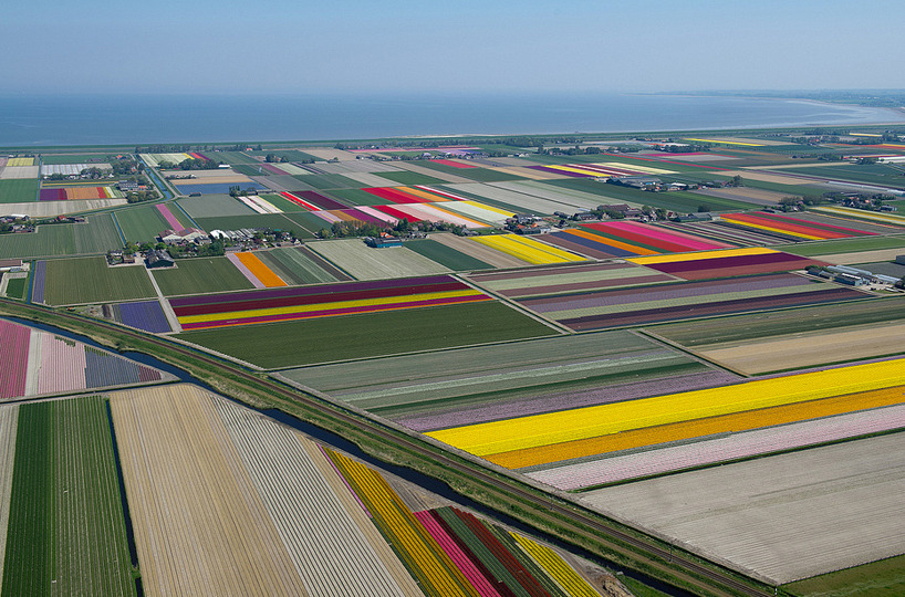 gilmo:  aerial photos of tulip fields in the netherlands