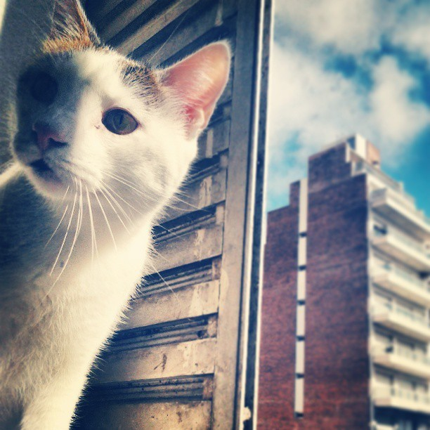 #cat #kitty #overview #portrait #photography #MrD413 #Rosario #Argentina #sky #sunny #building  (at MrD413' FORTRESS)