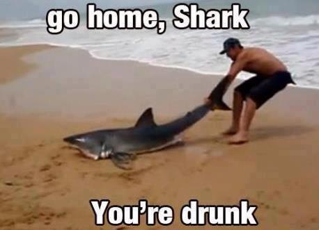 funnyhub:  Go Home Shark, You're Drunk!