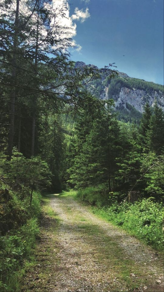 Hiking somewhere in Austria. Photo taken by me. #hiking#walking#wandering#nature walk#nature#woo#forest#nature path#forest road#woods trail#forest magic#wonderful#woodland #pine tree forest #pine tree#green#green woods#hills#mountains #over the hills and far away #landscape#sky#summer time#traveling#clouds#mountain range#trees
