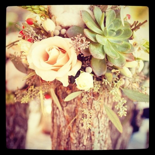 #bellestylebridal #centerpiece #treetrunk #succulents #rose #love #beautiful #organic #wedding #table #decor #stlbrides #stltweets #destination  (at bellestylefamily.onsugar.com)