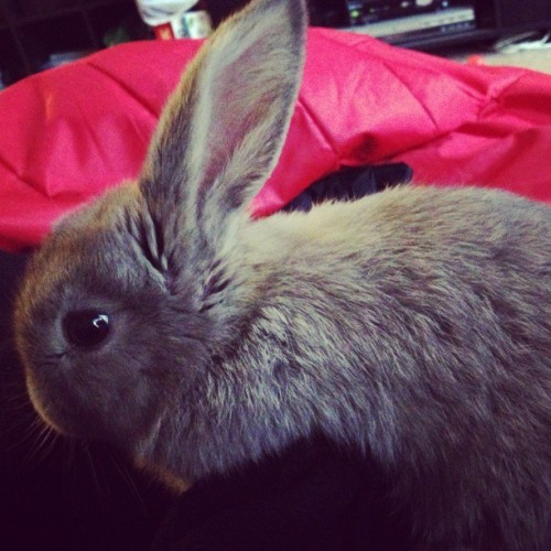 What should I name him? #bunny #rabbit  #animals