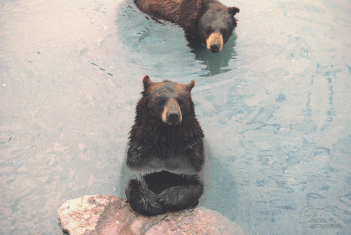 hea-rt:  Bears (by Felicia | Brimacombe) For anyone who's new to following me or didn't know, I AM OBSESSED WITH BEARS <3 <3 <3 <3