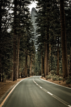brutalgeneration:  Road to Yosemite (by Giovanbattista Brancato)