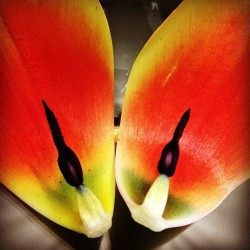 #tulip #instaflower #pretty #colors 💐🌷