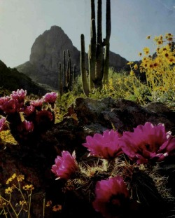 residuetrail:  The Sonoran Desert by Christopher L. Helms