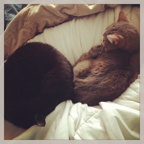 Yin/Yang nesting in my  body pillow 😻 (at la nueva casa cortez)