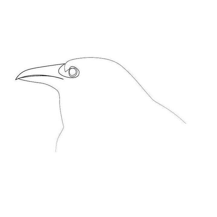 crow, minimal, animal, oneline - quibe | ello