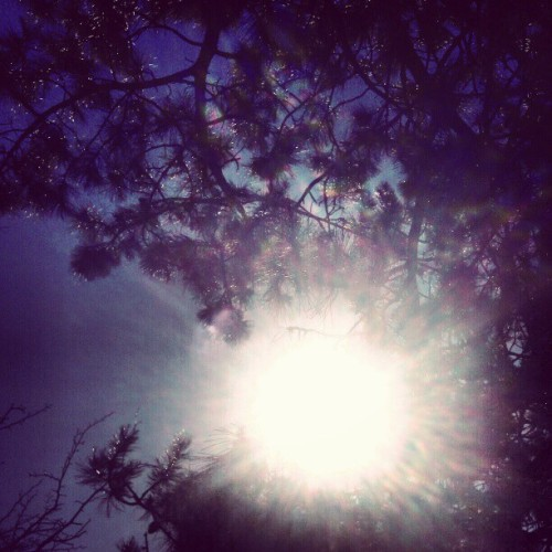 lokithefiend:  the #sun through the #trees