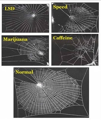 "thescienceofreality:  This is Your Web on Drugs ""In 1995 a group of NASA scientists experimented with drugs, literally. They studied the effects that various legal and illegal drugs have on house spiders, and specifically on the way they weave their webs. The results are both surprising and… not. The NASA scientists suggested the possibility of analyzing the periodic structure of the spiderwebs (or lack thereof) as a means of determining the relative toxicity levels of drugs. They do not seem to have continued down that road, however; one obstacle may have been the difficulty of extrapolating a given drug's toxicity to humans from its toxicity to spiders. Though similarities between effects on the two species do seem to exist, I'm not sure caffeine makes me feel quite like THAT. In fact, if I wove spiderwebs, that one would probably be pre-morning-cup-of-coffee. Such questions as what the research had to do with space shuttles or Mars rovers, where the scientists got the drugs, and what happened to the spiders later unfortunately cannot be answered here. The relevant NASA briefs are cited by other academic papers and New Scientist Magazine, but aren't themselves published on the web. The world wide one, that is.""  Read more here and here, and see what happens to their mental state here."