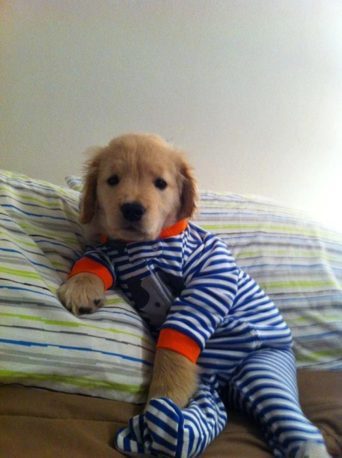 actualcanadiansherlockholmes:  THE PUPPY HAS PAJAMAS AND IM GONNA DIE