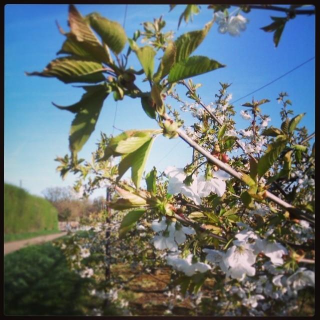 Tudy běhám #spring #blossom #morning #run #runstagram