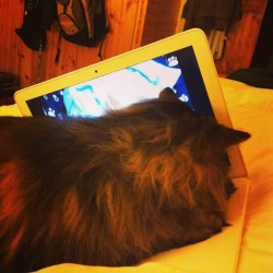 Trying to watch something! #cat #catfasionshow #mycatisbetterthanyourcat