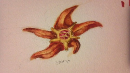 Here's a quick watercolor doodle of staryu