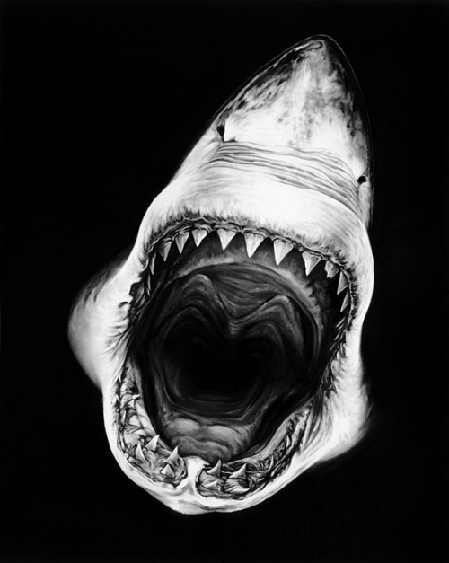 thekhooll:  Shark! Large-scale charcoal Drawings by Robert Longo