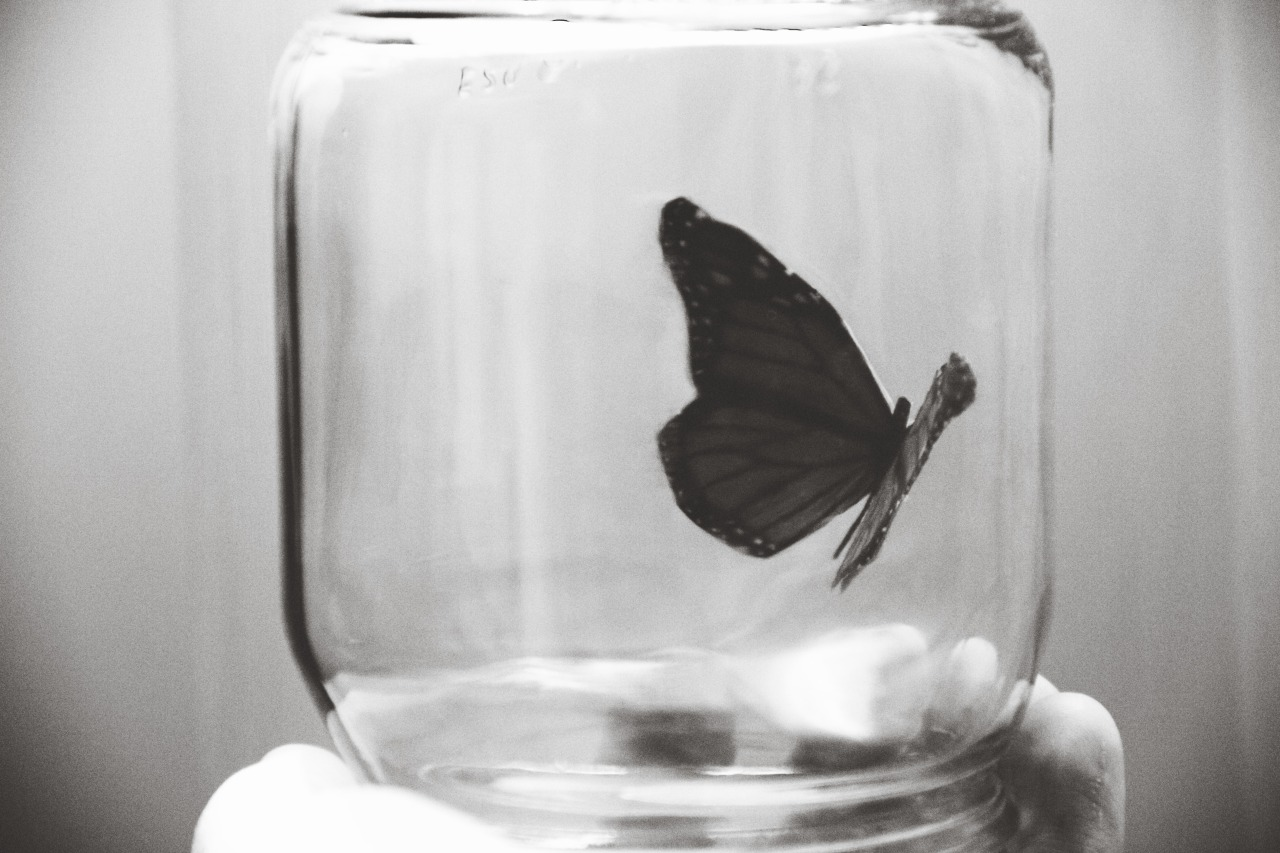 tumblropenarts:  The Art of Capturing Butterflies ( this one is a beautiful, beguiling, butterfly ) by Oscar Piccolo.  www.oscarpiccolo.tumblr.com