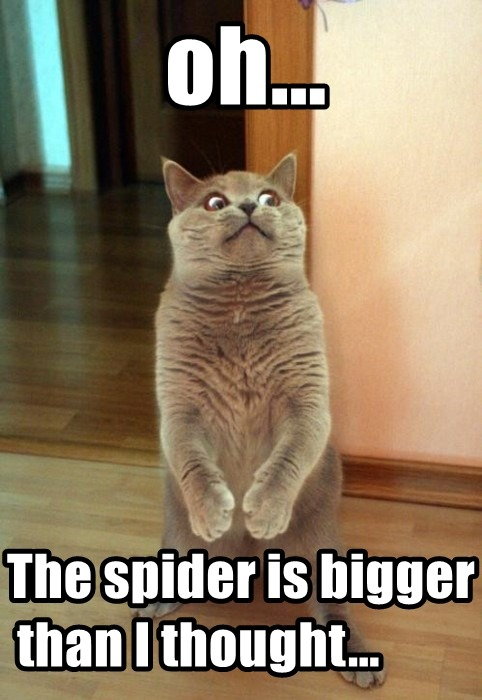 Forget about this spider, let's do something else…hehe