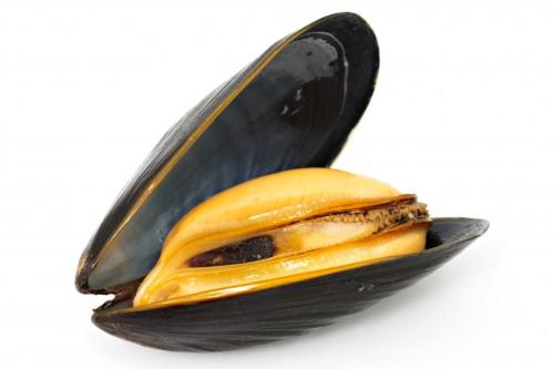 """moule"" is actual french slang for a vulva. it literally means mussel."