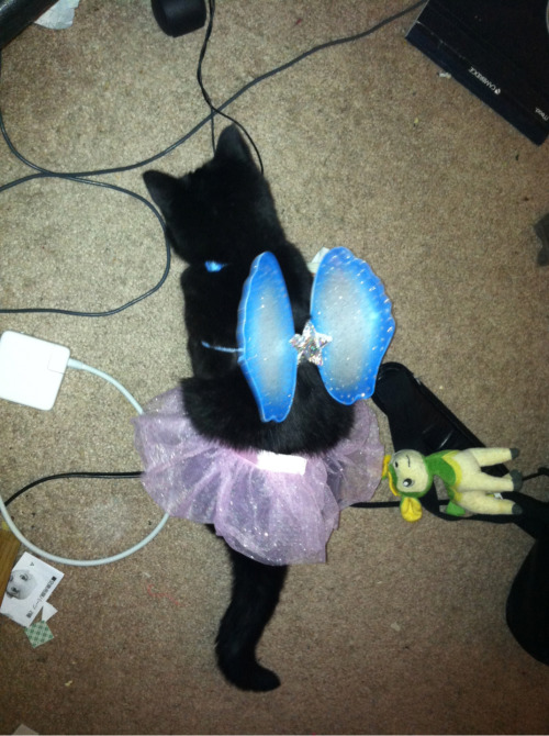 amischiefofmice:  The cat is super high so that means its time for Dress Up!!!!!!!!!!!!!!  golly what good tags, i agree with this post