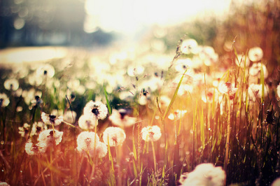 notreallysimple:  Honey coated words su @weheartit.com - http://whrt.it/X6Lvs2
