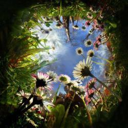 trippy drugs shrooms acid psychedelic flowers garden