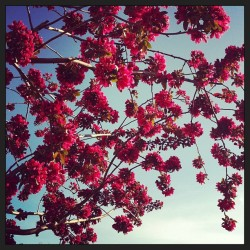 #spring #mademyday #blossoms #flowers #bloom #wanderlust #bloom #love #creation #nature #lovely