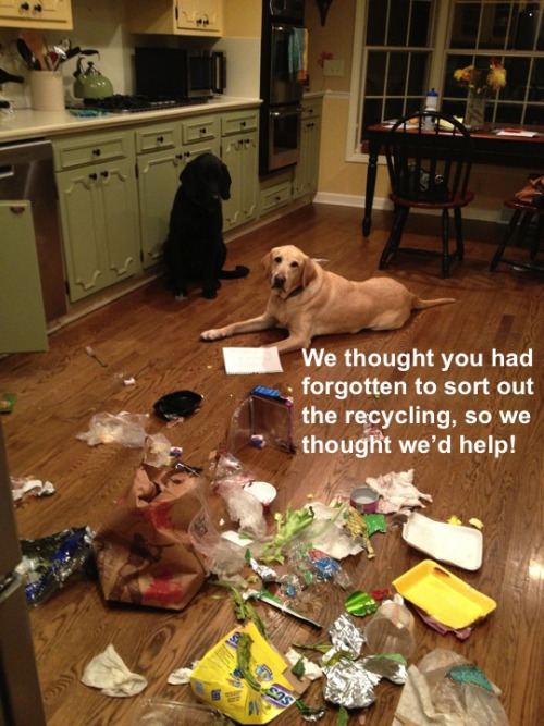 dogshaming:  Your forgot the recycling!We thought you had forgotten to sort out the recycling, so we thought we'd help! Tyson and Truman…View Post