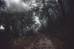photoset art landscape fall nature autumn photographers on tumblr lensblr original photographers