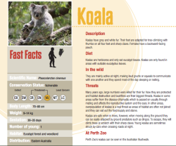 Over at the Perth Zoo Website they have a ton of printable animal fact sheets! PERFECT for my lesson. Winner winner chicken dinner.