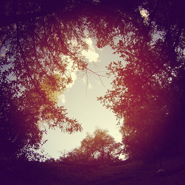 Sky above me, Earth below me, Fire within me. #existence #nature #trees #sky
